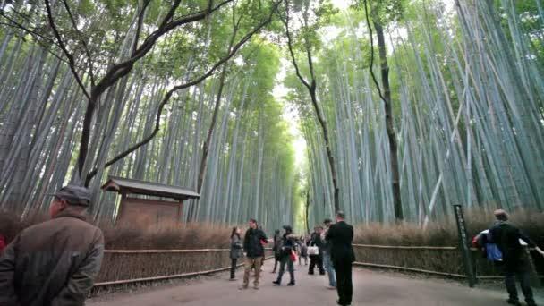 zelené bambusové háje v arashiyama