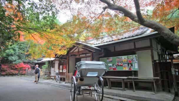 červený Javor dlanitolistý podzim podzim, přirozeně rostoucí na území strom v Kjótu, Japonsko