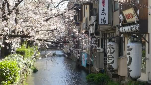 Kyoto, Japán - 2015. március 28.: Cherry blossom folyó oldalán a Kiotói