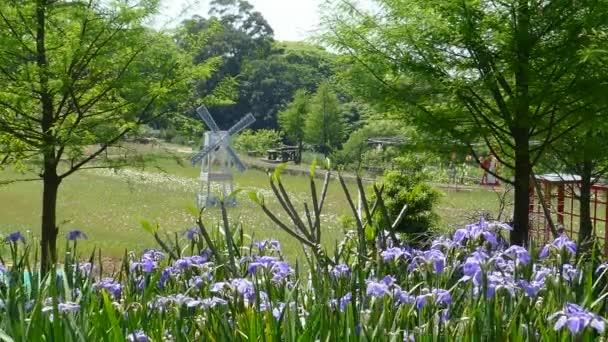 zblízka purpurového kosatce květin