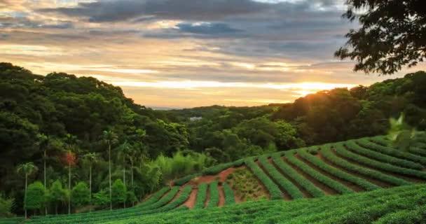 lasso di tempo del tè giardino tramonto con bello sfondo