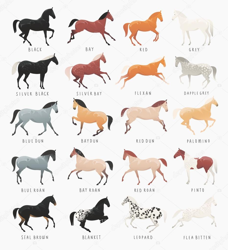 Common Horse Coat Colors