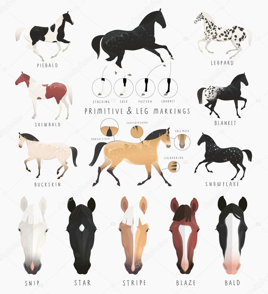 Pictures Coat Clip Art Clip Art Horse Markings Stock Vector C Deisey 104927990