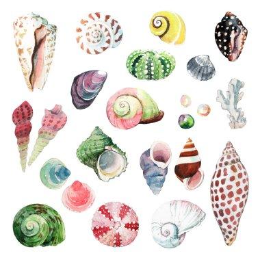 Watercolour Seashells