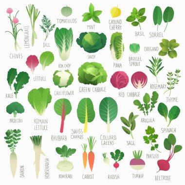 Food Vol.1: Vegetables and Herbs
