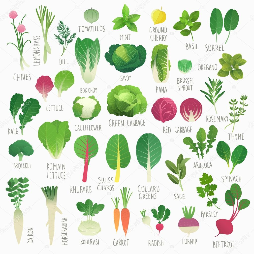 Food Vol.1: Vegetables and Herbs