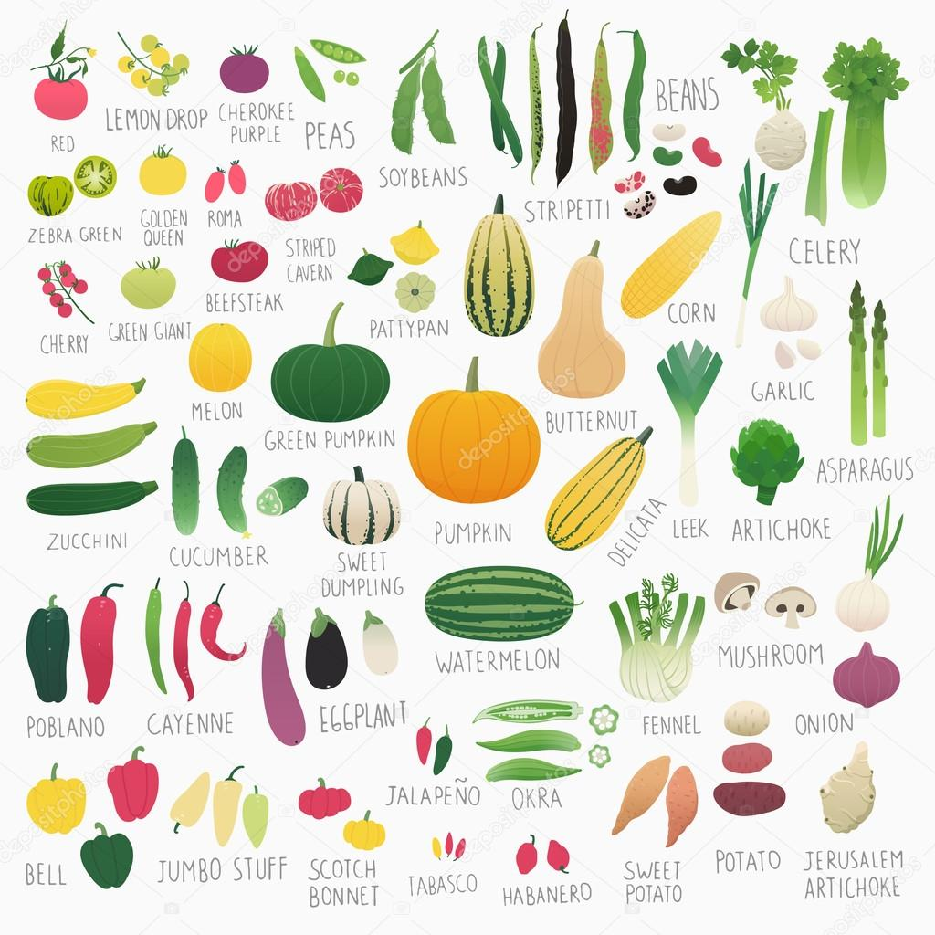 Food Vol.2: Vegetables
