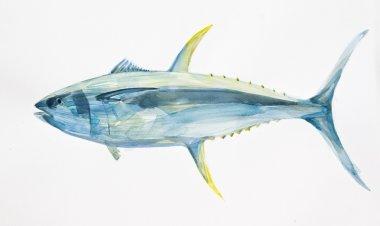 watercolor tuna