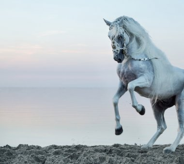 Majestic horse galloping on the beach