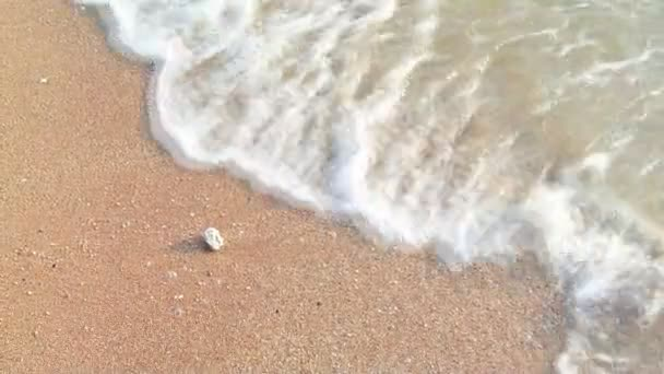 Sea surf with seashell on the beach (Handheld shot)