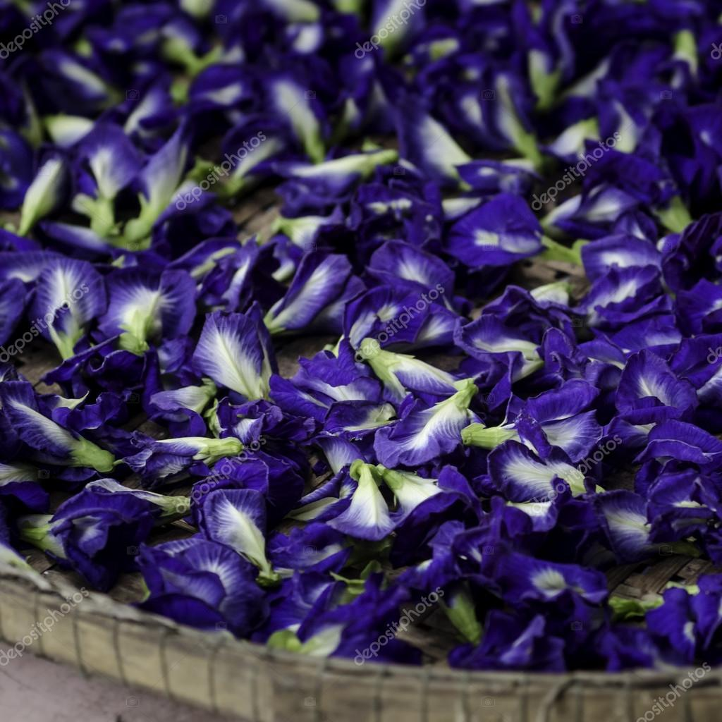 Blue Butterfly Pea Flowers for Herbal Shampoo