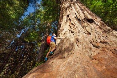 Man climbs on big tree