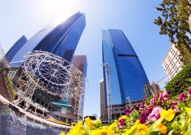 skyscrapers in downtown, LA
