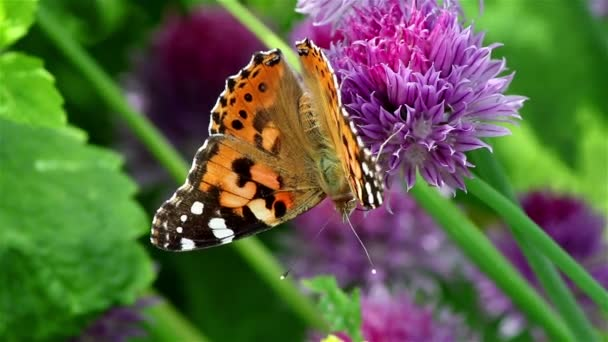 Nice butterfly on a violet flower