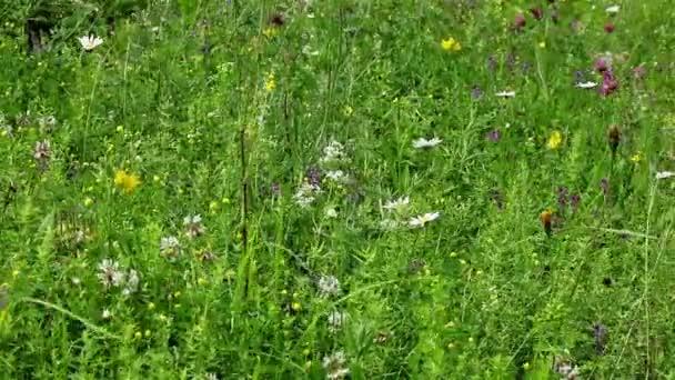 Zöld mező virágok