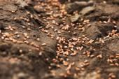 Fotografie rozoraný pozemek pro obiloviny