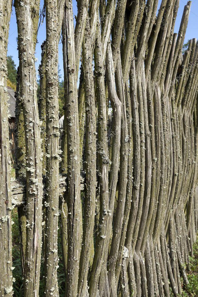 Beliebt Bevorzugt Zaun von Zweigen — Stockfoto © ligora #117512706 @TE_33