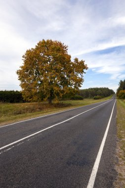 The autumn road
