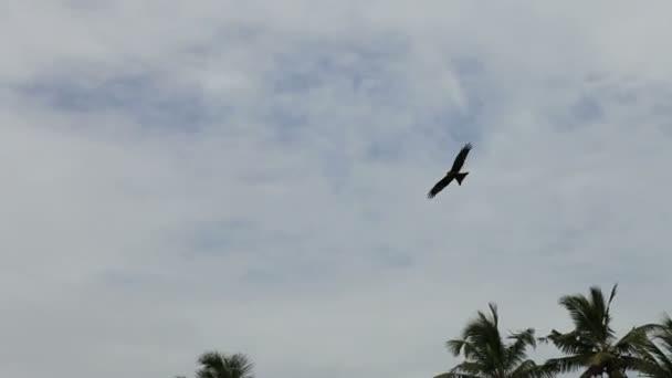 Orel v zatažené obloze