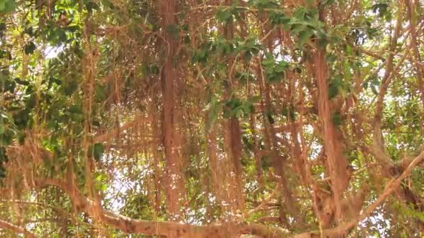Panorama der tropischen Baum