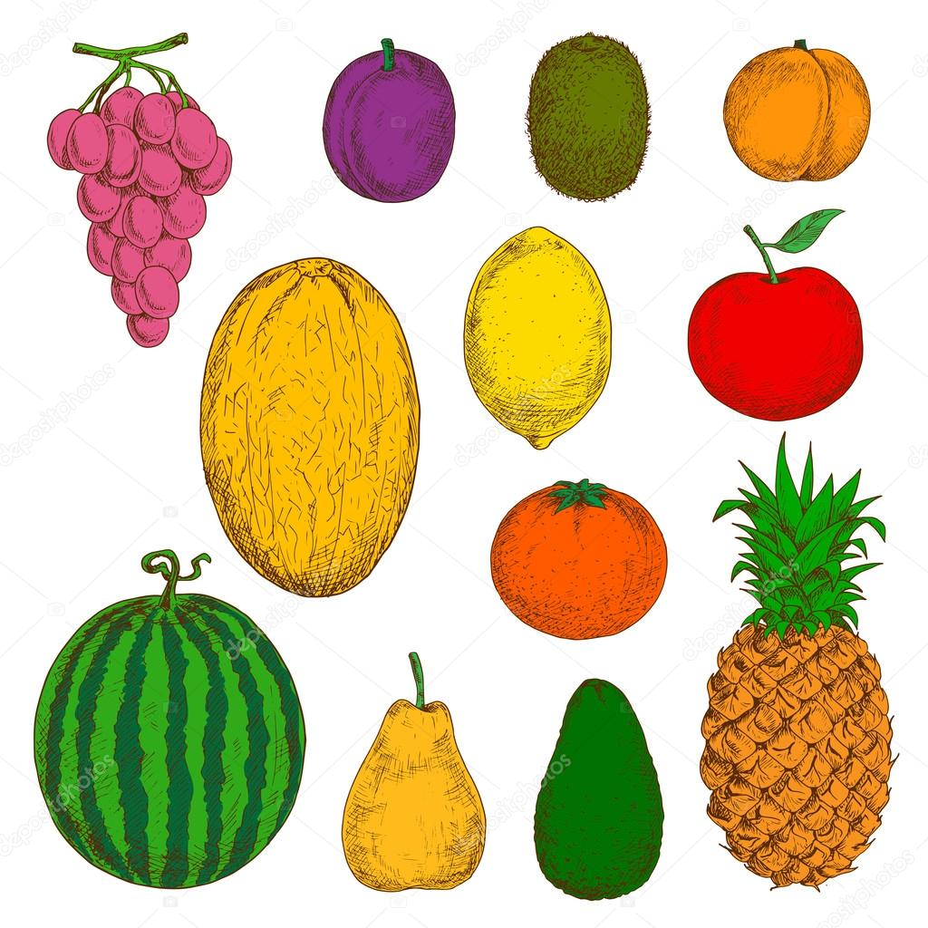 fresh and juicy fruits sketches stock vector seamartini 111339680