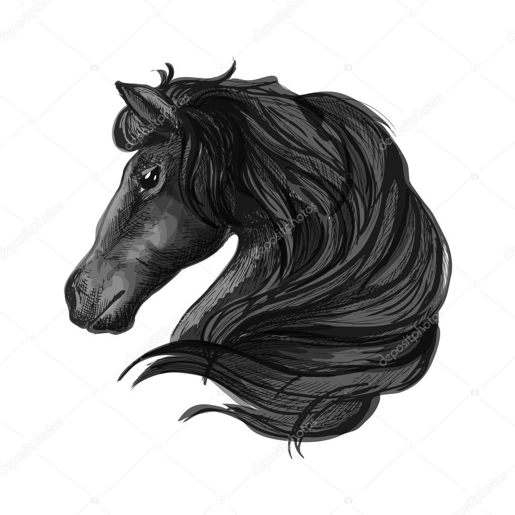 Black Stallion Horse Drawing Black Stallion Horse Head Sketch Stock Vector C Seamartini 120695914