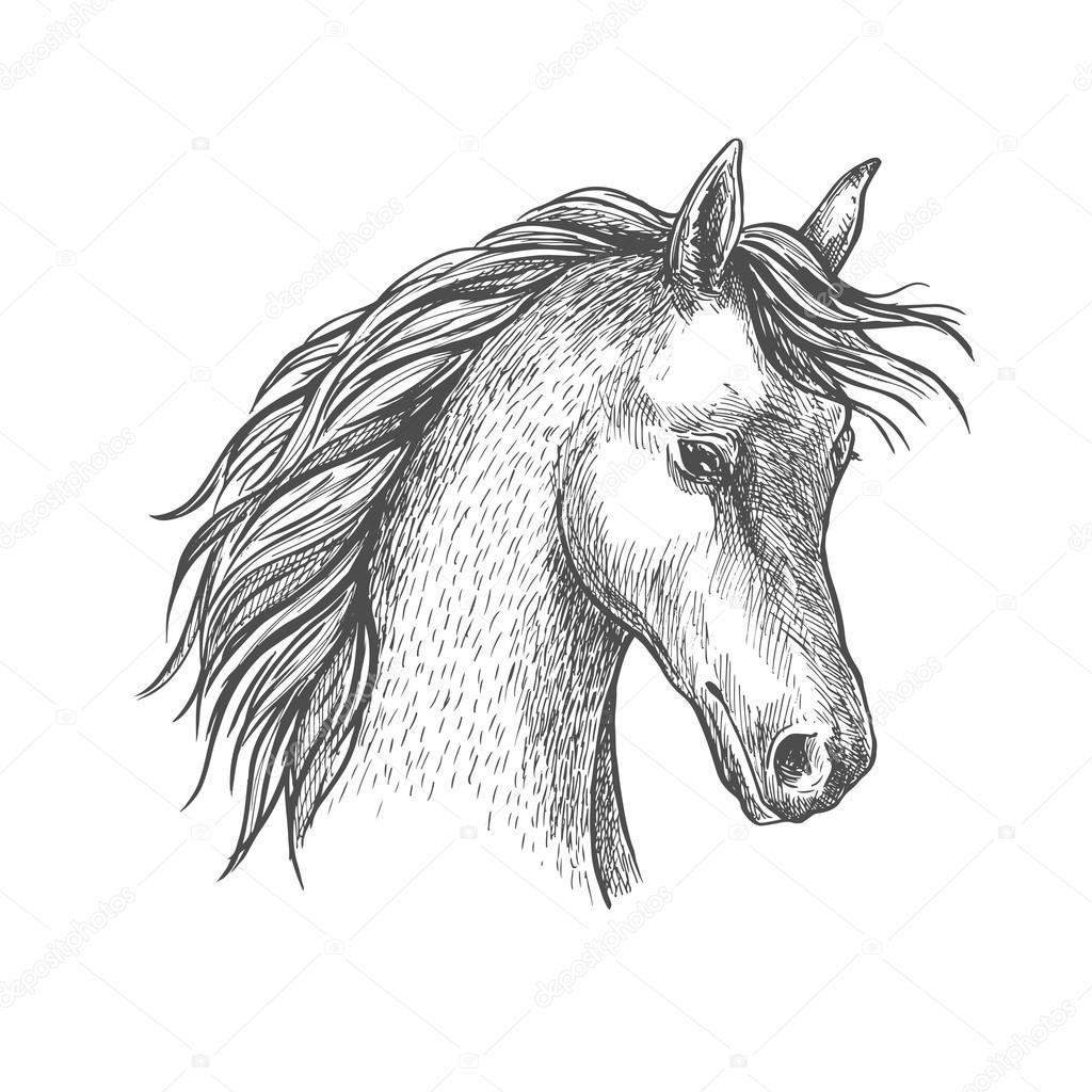 Head Of Arabian Horse Sketch Symbol Stock Vector C Seamartini 120697290