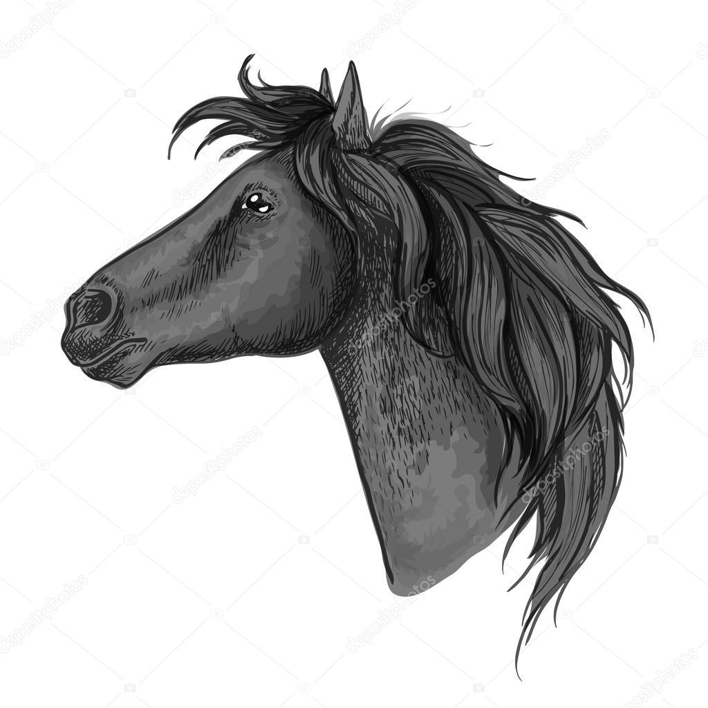 Black Horse Head Sketch Portrait Stock Vector C Seamartini 122698386