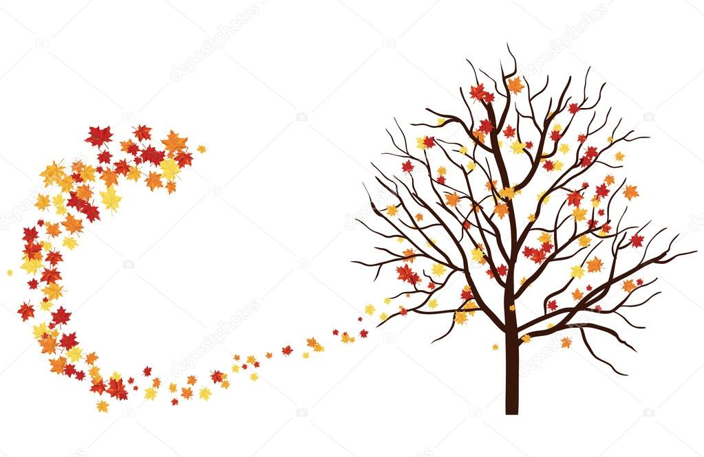 Autumn tree  with maple leaves