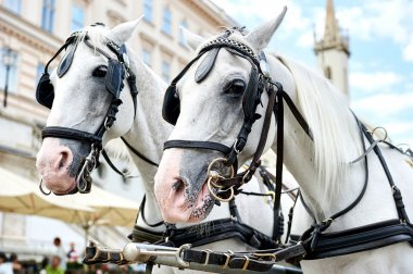 Horse-drawn carriage in Vienna, Austria