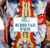 Fotografie Donkey taxi