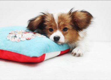 Little puppy on a bed