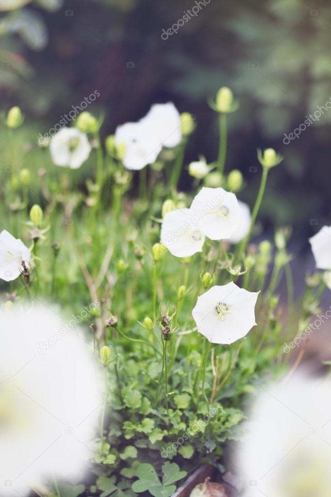 White bells flowers stock photo mallivan 67402829 white bells flowers stock photo mightylinksfo