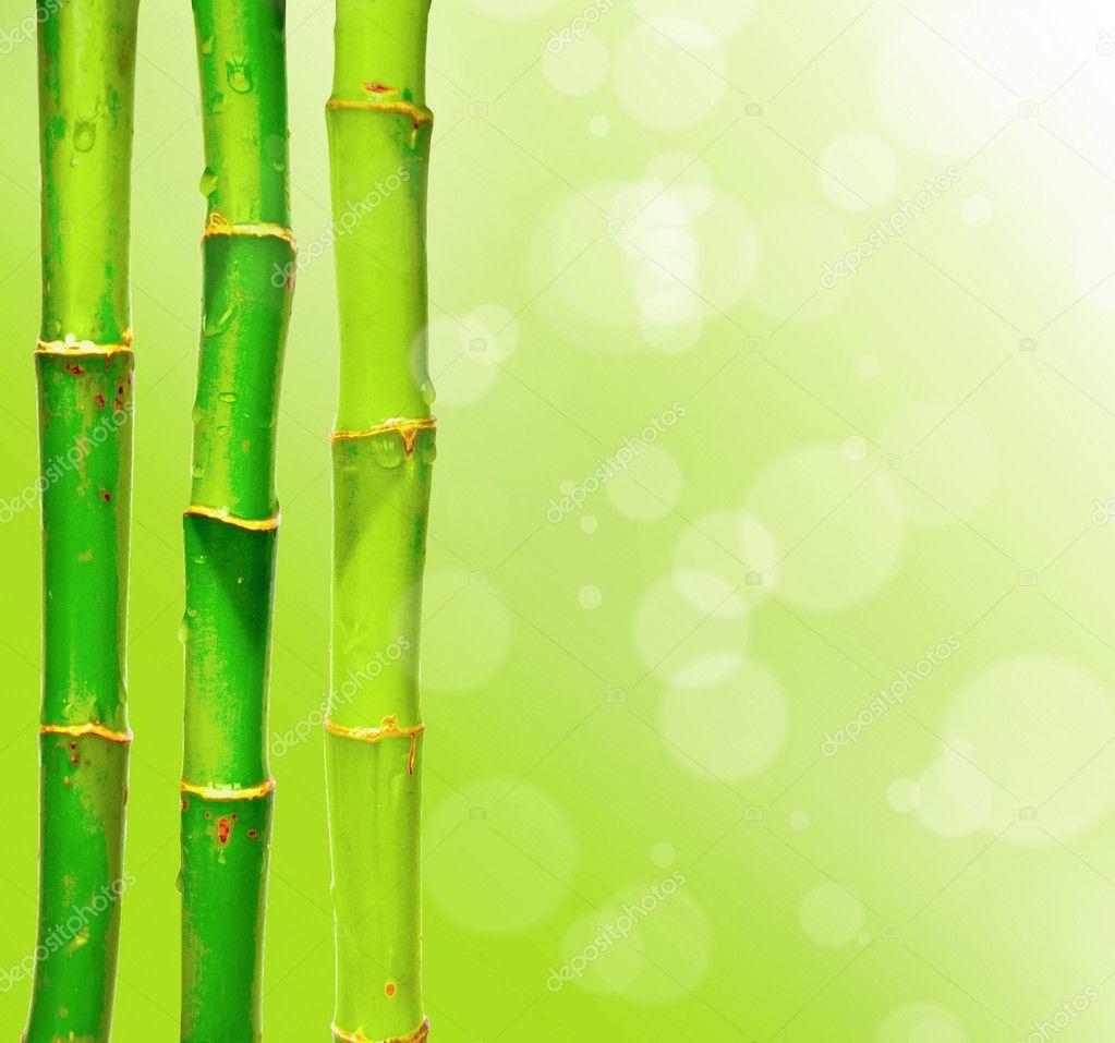 Palos De Bambu Trasfondo Borroneado Con Bokeh Foto De Stock - Palos-de-bambu
