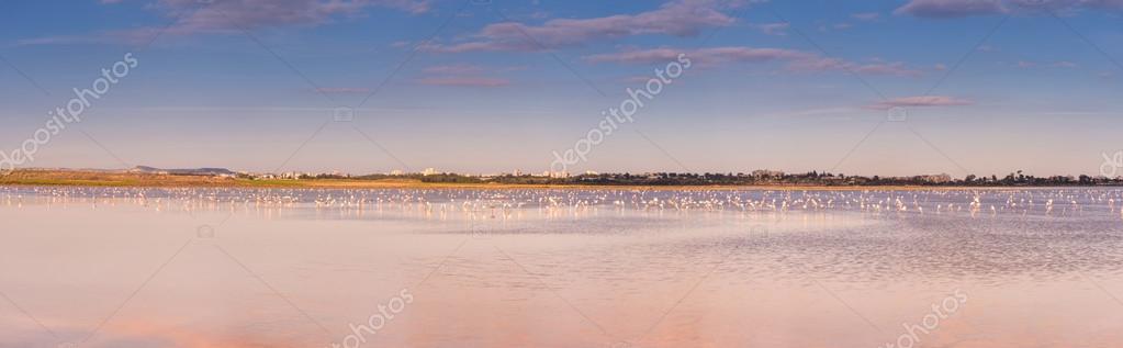 Flamingos at the salt lake. Larnaca, Cyprus