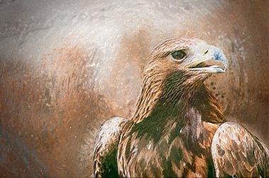 Hawk portrait. Drawn illustration