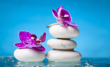 Flowers on white zen stones