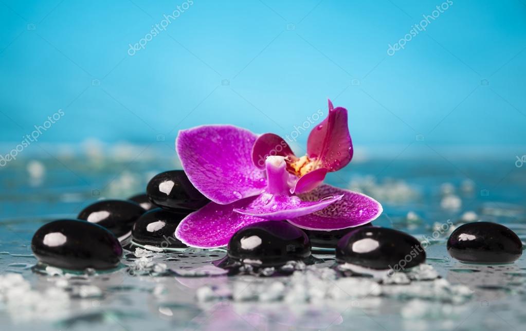 Orchid flower and  zen stones