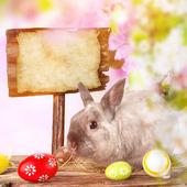 Fotografie Lustige kleine Kaninchen. Ostern-Hintergrund