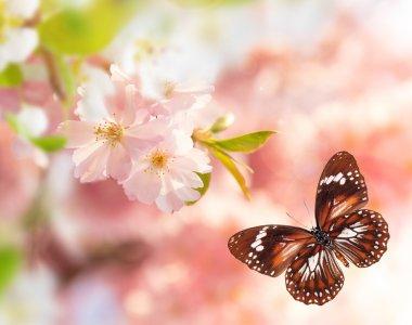 "Картина, постер, плакат, фотообои ""spring blossoms with butterfly."", артикул 104704148"