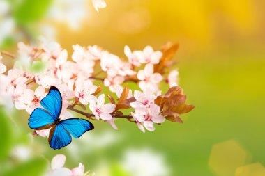 "Картина, постер, плакат, фотообои ""spring blossoms with butterfly."", артикул 104705308"