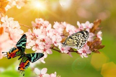 "Картина, постер, плакат, фотообои ""spring blossoms with butterfly."", артикул 104707412"