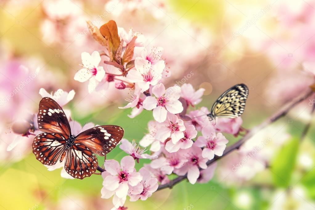 Spring blossoms with butterfly.