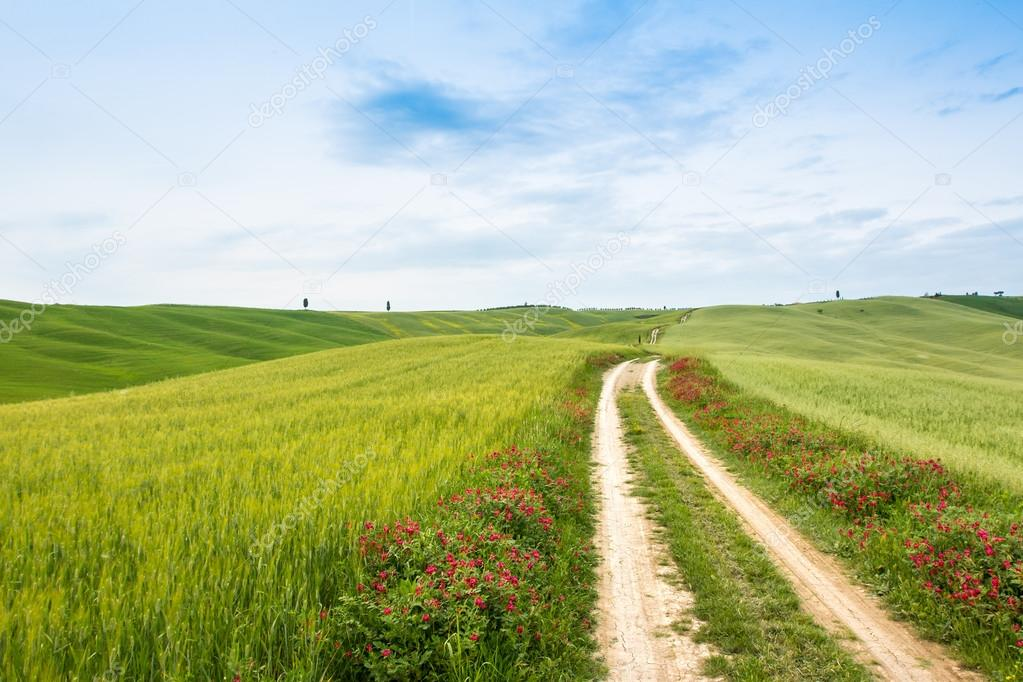 Фотообои Landscape of Tuscany, hills and meadows, Toscana - Italy