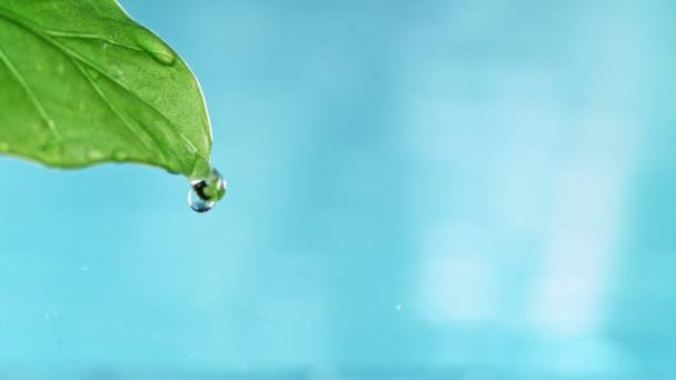 Super pomalý pohyb zeleného listu s kapkou vody