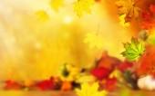 Fotografie krásné podzimní pozadí