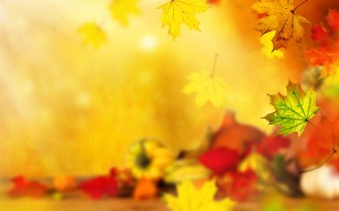 Beautiful autumn background with maple leaves stock vector