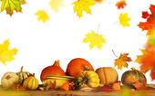 Fotografie Beautiful autumn background
