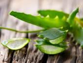 Fotografia foglie di aloe vera