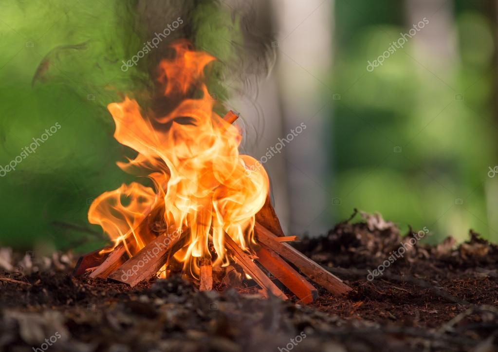 Bonfire in spring forest